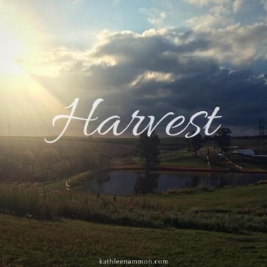 Harvest 2017.jpg