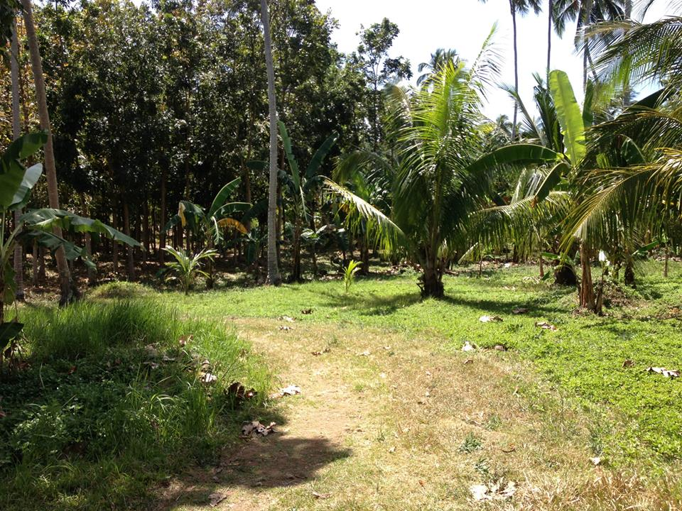 The Land at Tiaong 11.jpg