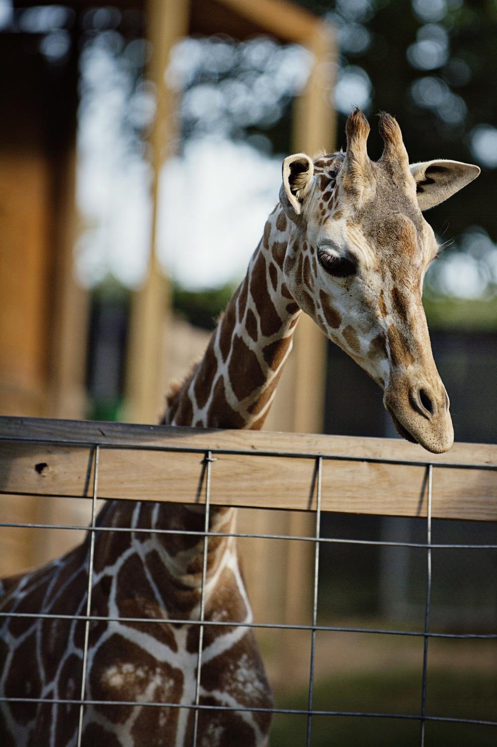 Zoo_052.jpg