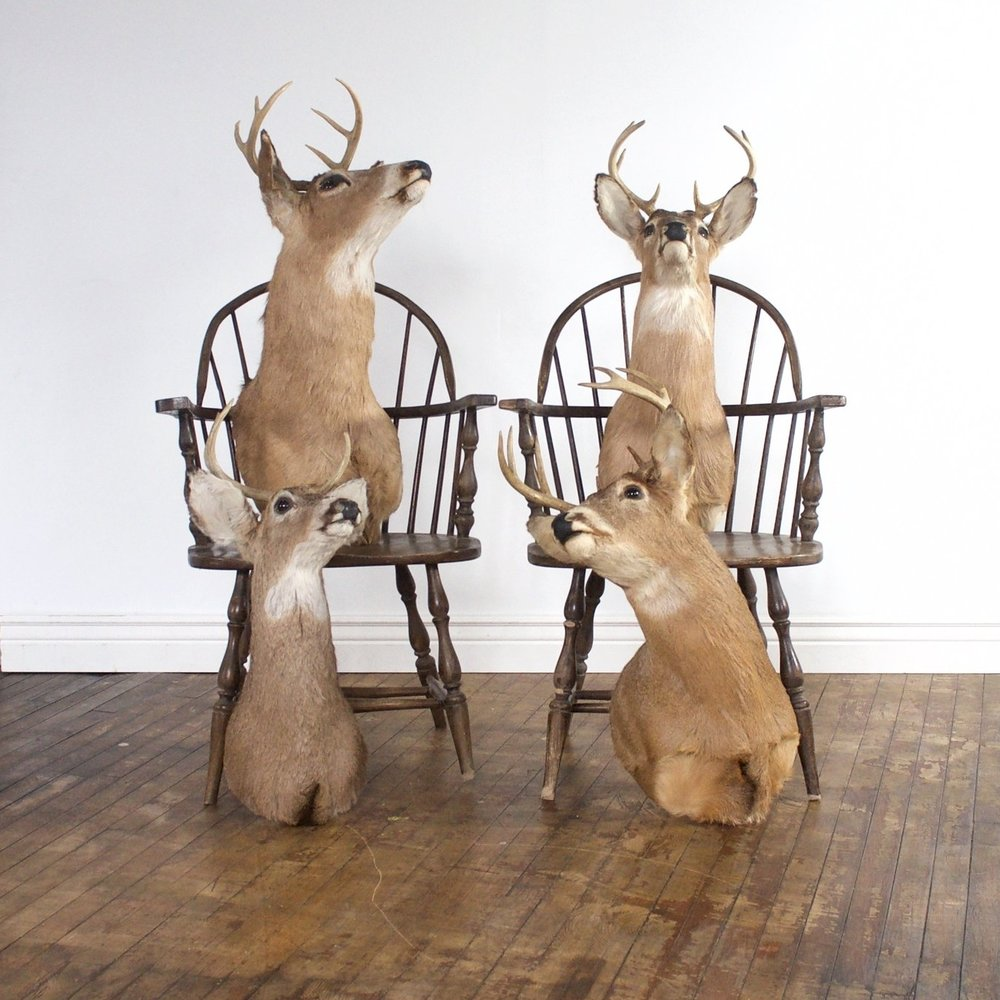Taxidermy (3 deer, 1 grouse)