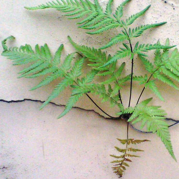 Fern: magic