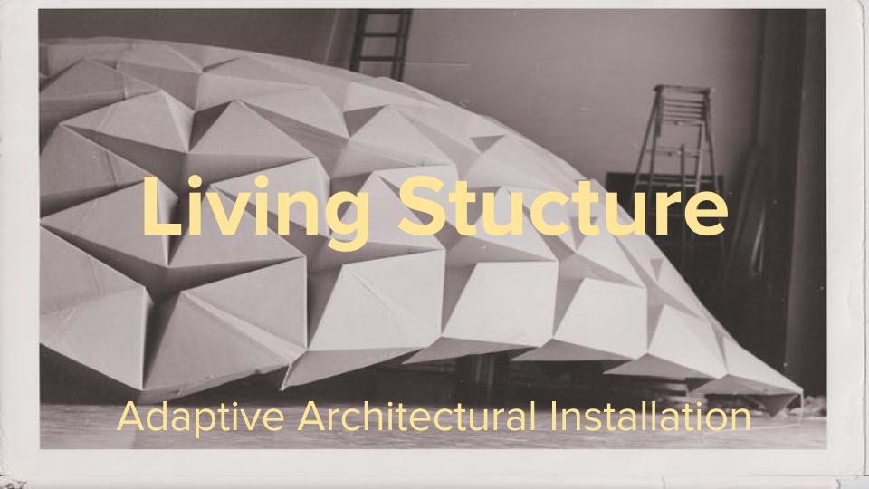 Living Ceiling (1).jpg