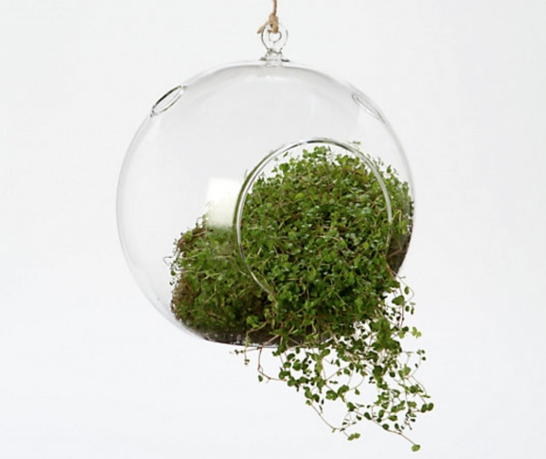 Hanging Bubble Terrarium, $28, Terrain