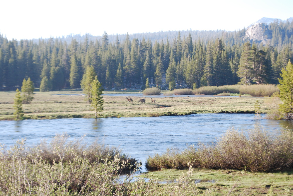 Tuolumne Meadows.