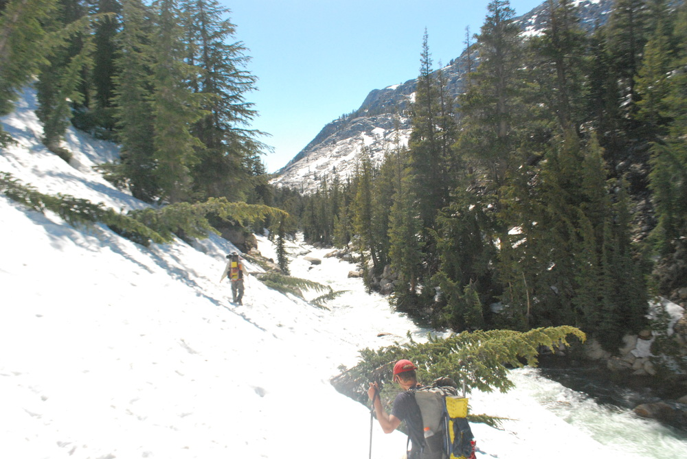 Steep slopes of Kerrick Canyon. Even the pines can't resist the snow and gravity pulling them down into Rancheria Creek.