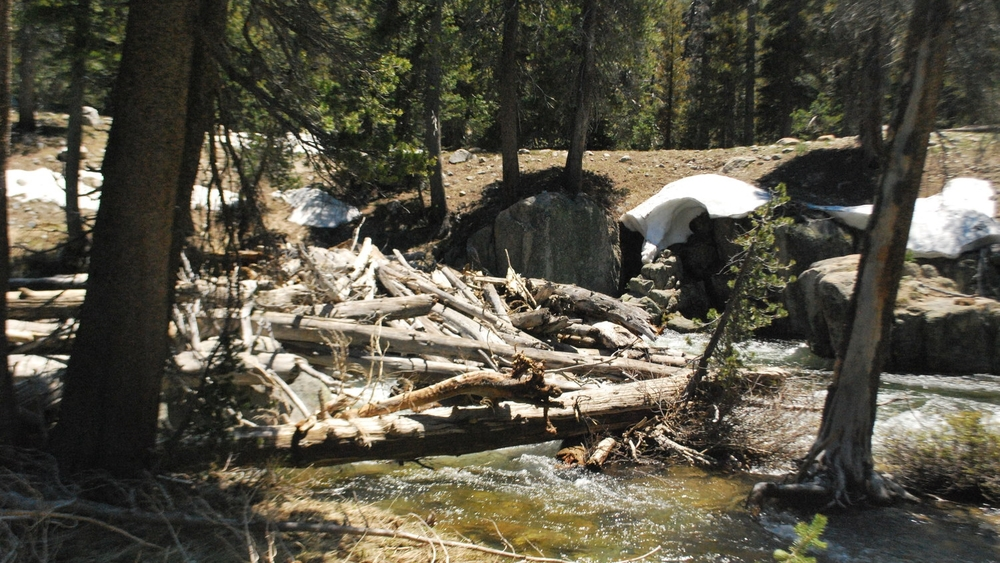 Log dam at Return Creek.