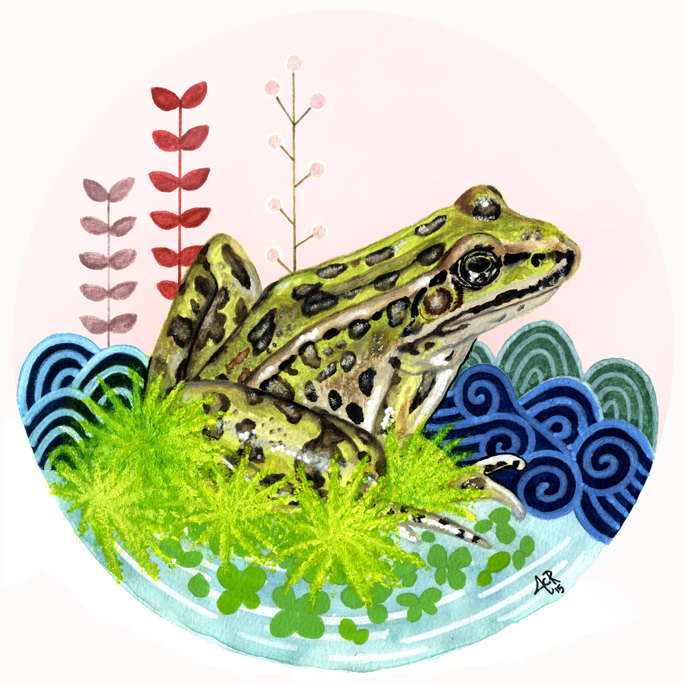 "© 2015   Jennifer Rowe  ,  ""Majesty of the Little Things: Northern Leopard Frog (Lithobates Pipiens)"""