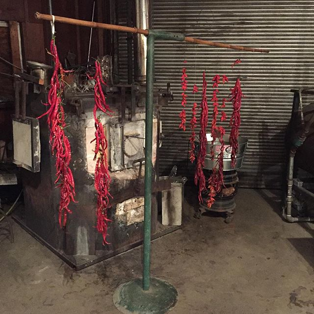 Drying #organic #chiles in front of the glass furnace at #bohoglasscoop. Talk to Mary the Fairy on the astral plane if you want to get hot!