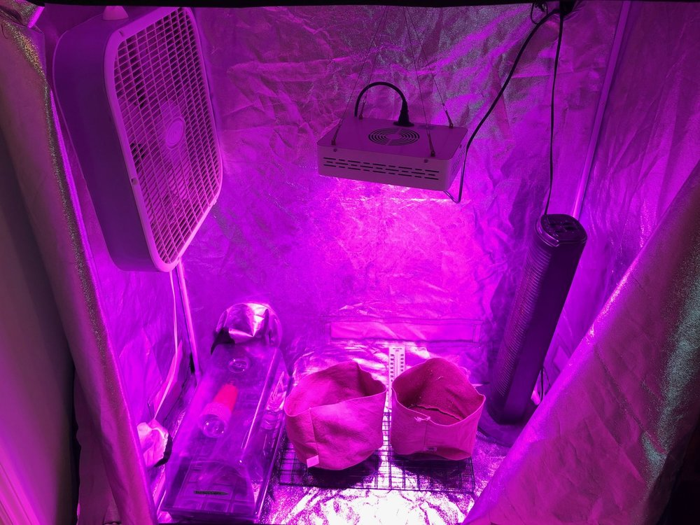Tent set up and running to get temperature reading at maximum output.