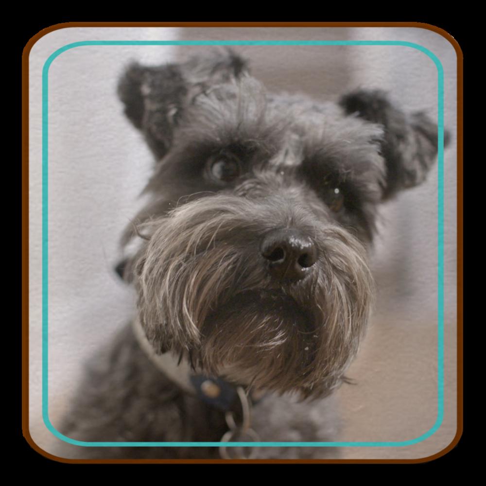 CLIENT: DOGS TRUST Campaign VIEW CASE STUDY