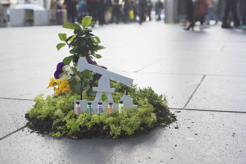 The_Pothole_Gardener8934.jpg
