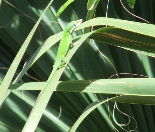 lizardpoop1.jpg