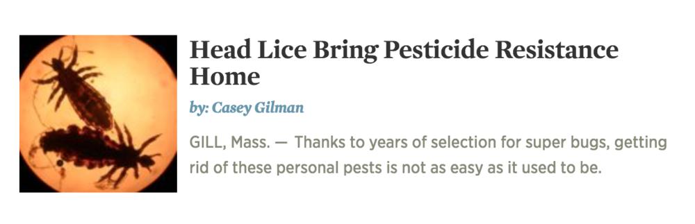 Gilman_NEPR_head Lice