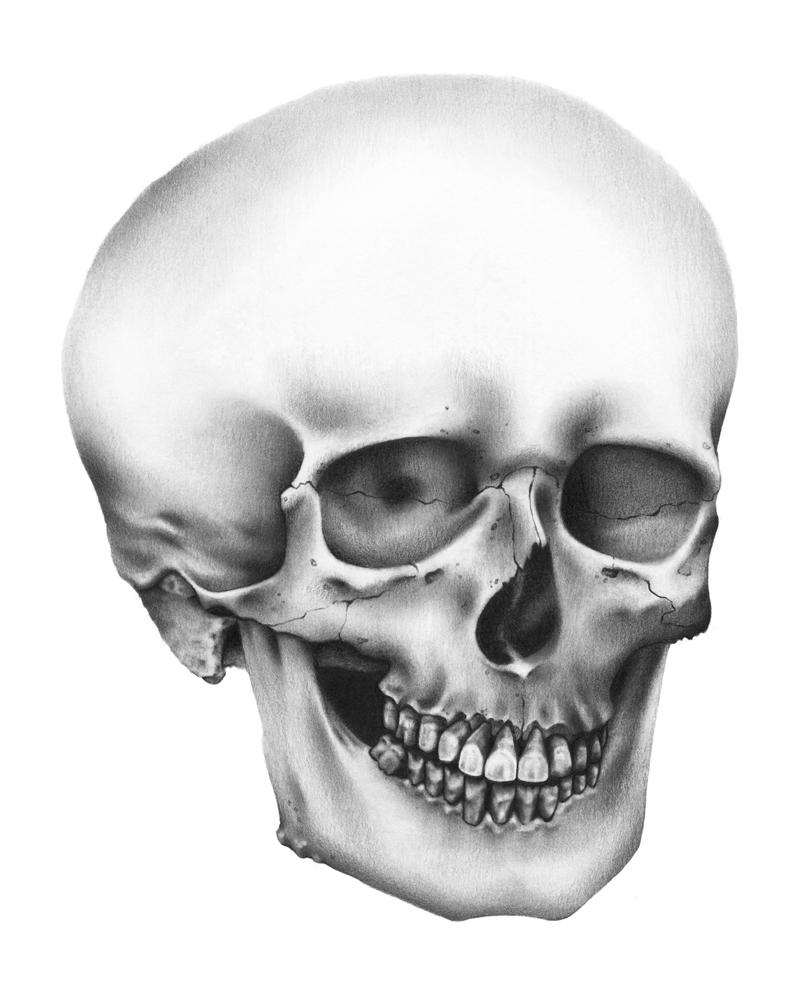 skull118.jpg