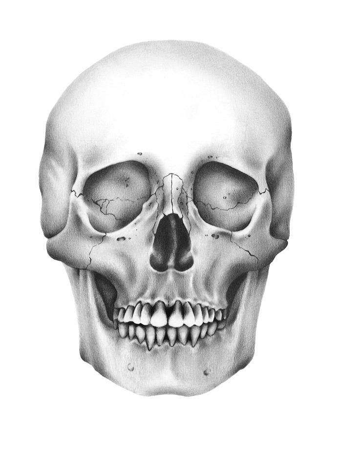 skull110.sharp.jpg