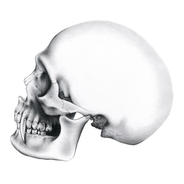 Vampire.skull.317.sq.jpg