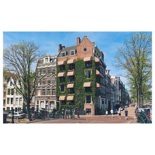 🌿 #vsco #vscocam #amsterdam