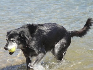2.30pm Playing Fetch on the Beach Behind the Bank