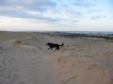 Dunes Jan 2006 #2.jpg