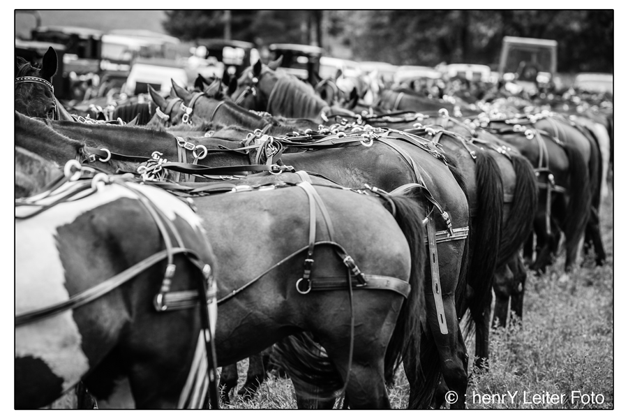 Horses in the parking lot. | © : henrY Leiter Foto
