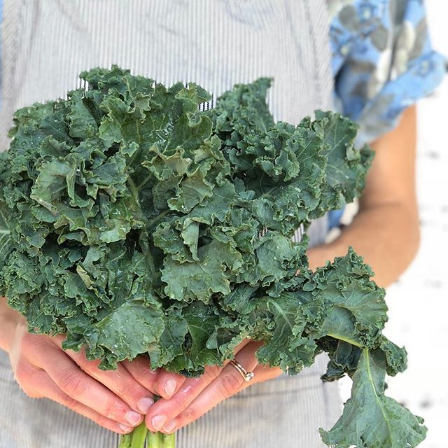 Thanks for the beautiful kale @thickettymountainfarms! 💛 #togetherisbest