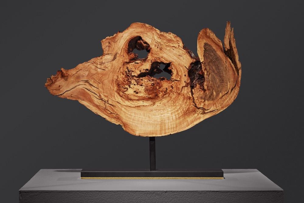 puffer fish 19579 - 2.jpg