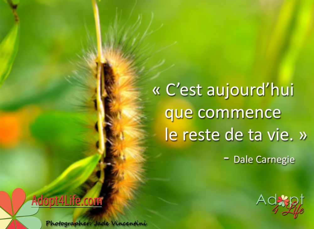 Facebook_AdoptionQuote_French_020_Dec2014_png.png