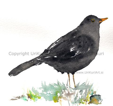 BlackBird Stane.