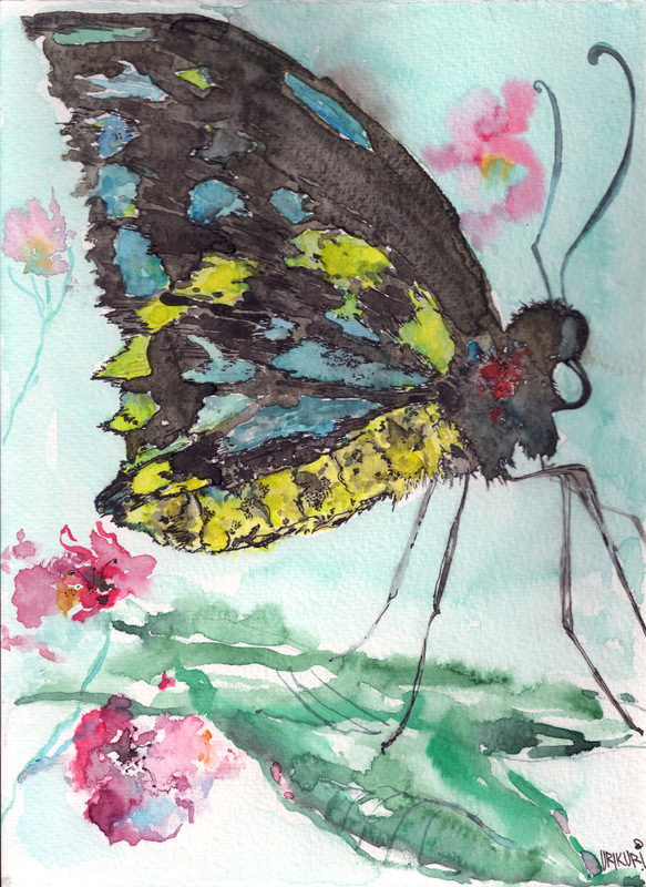 bigbirdybutterfly