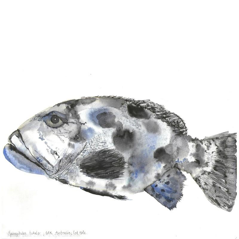 The Potato Cod (  Epinephelus tukula) is a native fish in Australia.