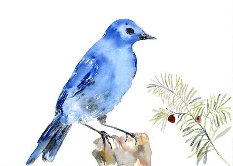 5: Lucky BlueBird.