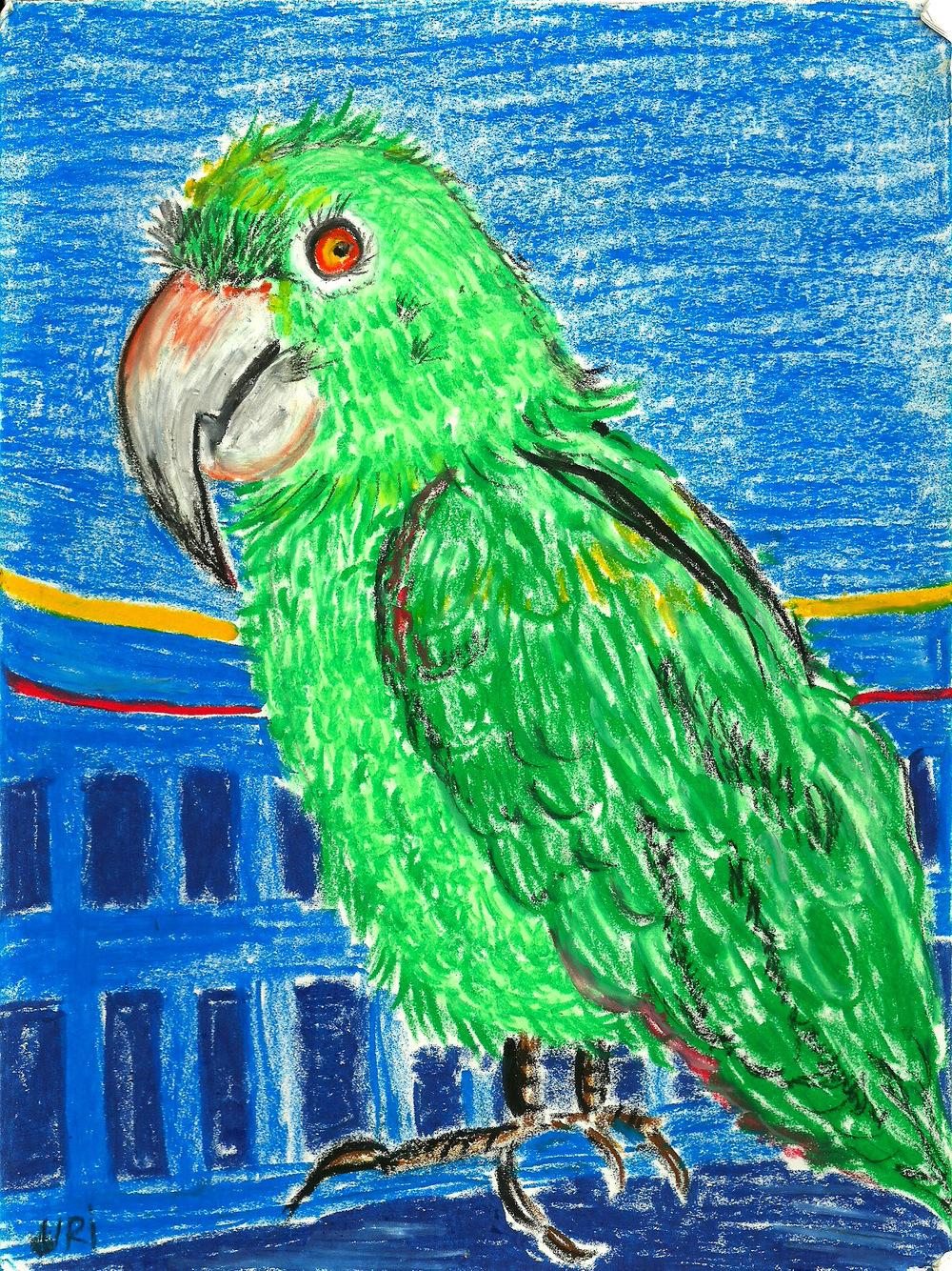 macaw0001.jpg