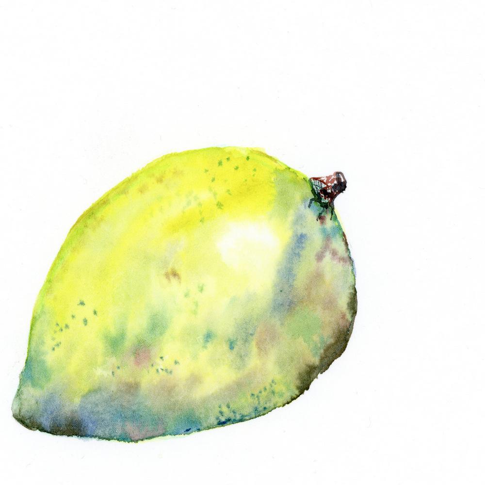 limone001.jpg