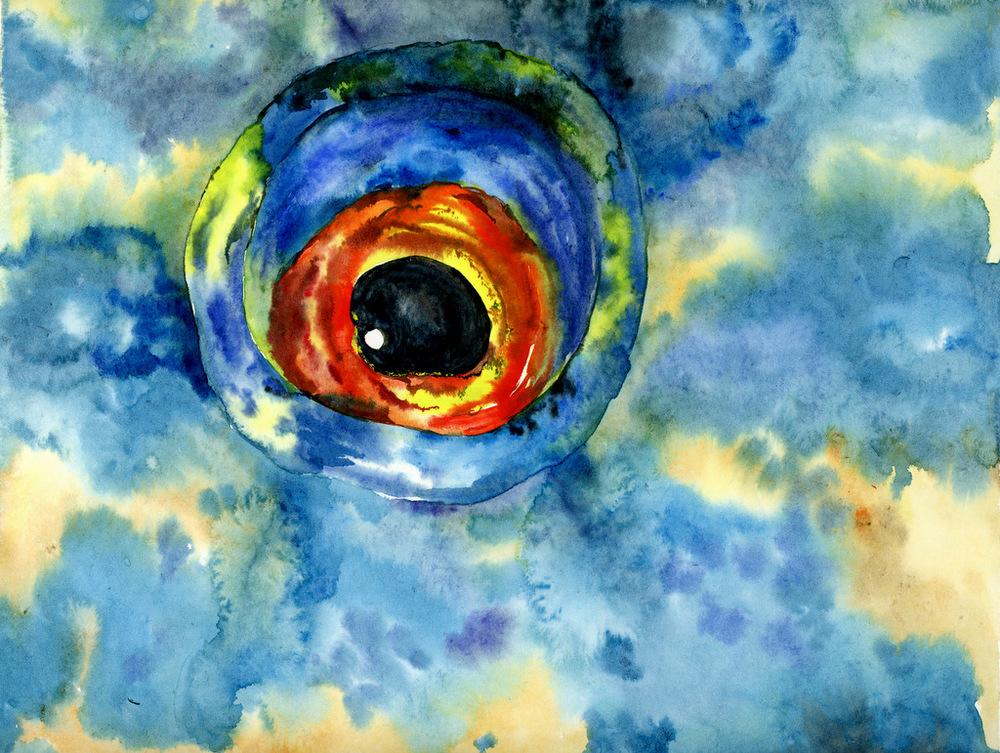parrot-fish-eye004.jpg