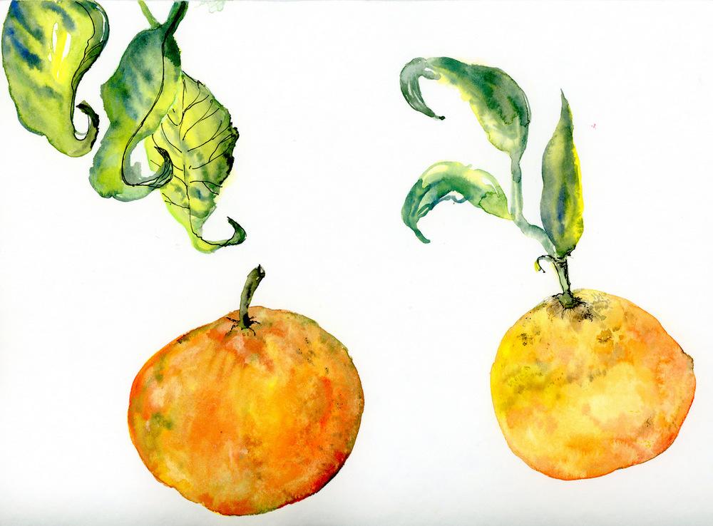 pomarance002.jpg