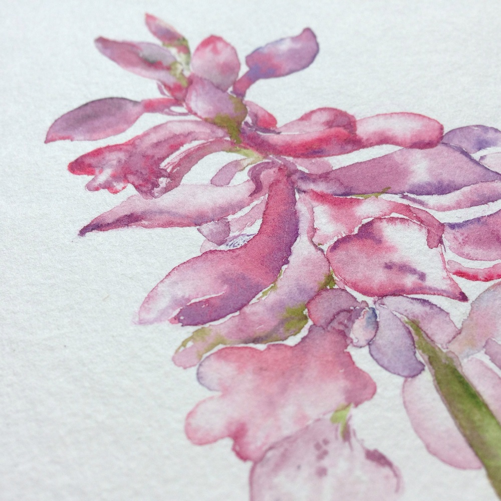 Cvet divje orhideje/ Wild orchid.