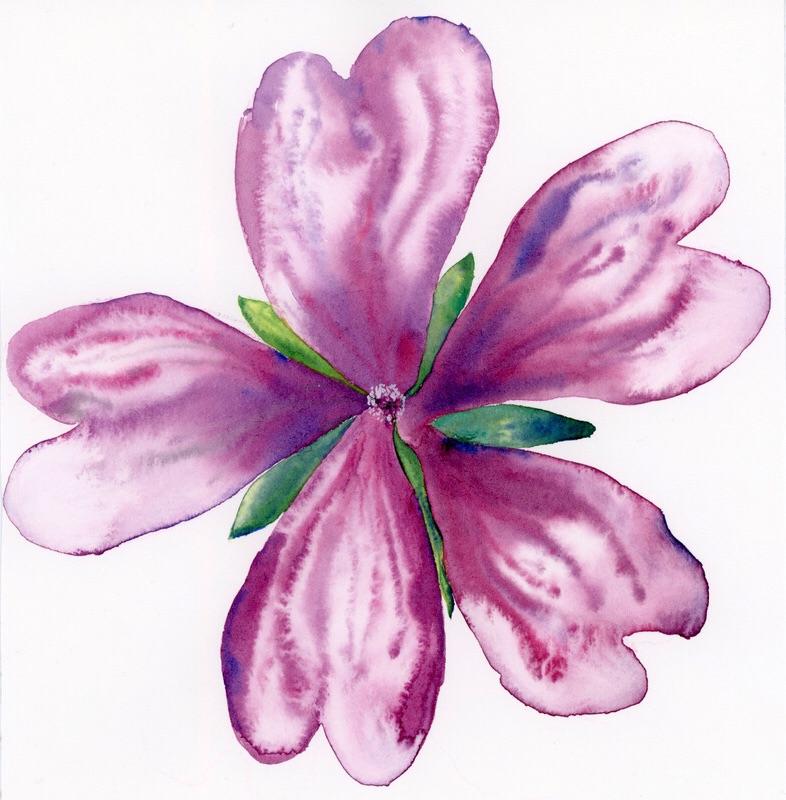 Cvet malve oz. slezenovca/ Malva flower.