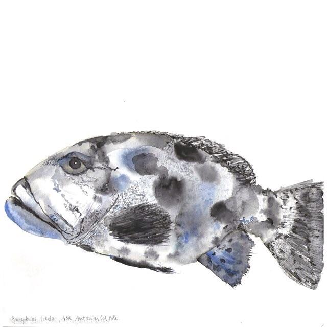 Potato cod fish - UriKuri watercolor