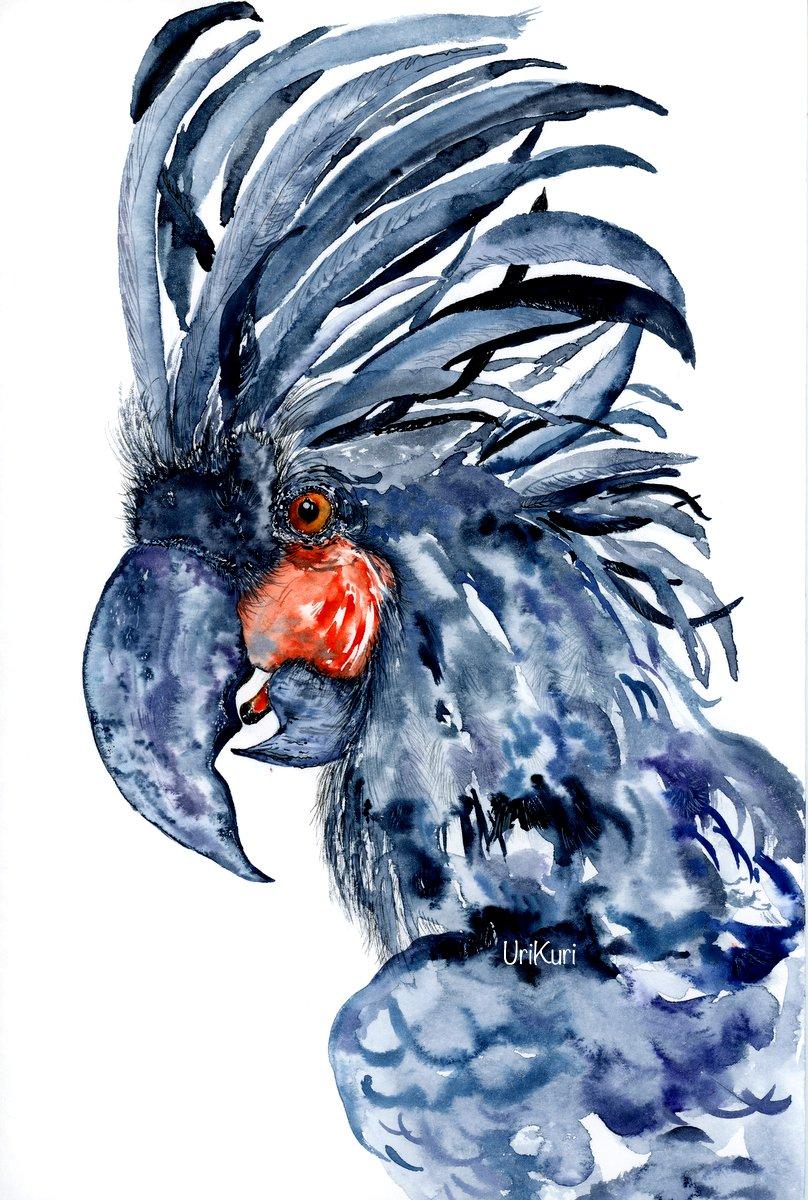 Palm cockatoo. / UriKuri Watercolors.