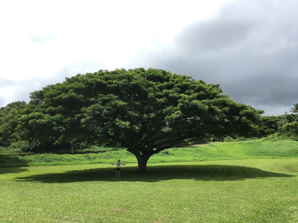 Hitachi Tree and me.jpg