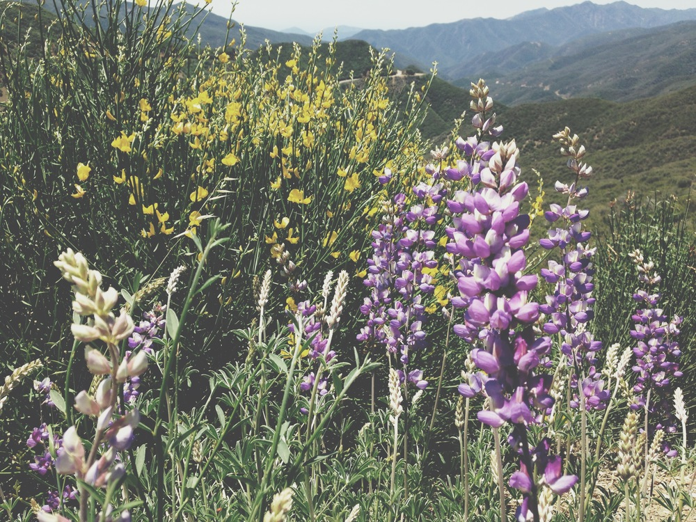 The trip began just over the hills from Santa Barbara, where the wildflowers grow like they don't care.