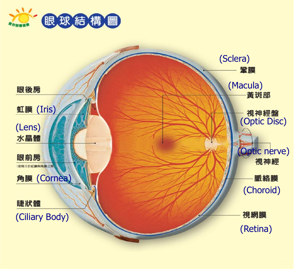 EYE ANATOMY — ALTA EYE CARE