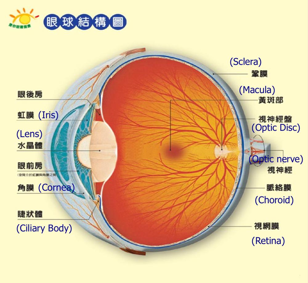 eyeanatomyCH-ENG