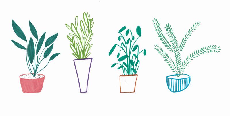 1_plant.jpg