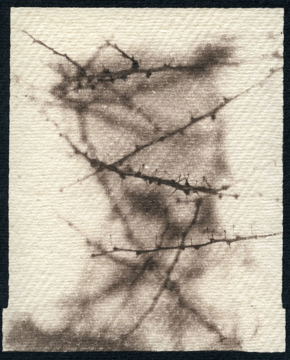Dormant Bush    Toned Cyanotype, 2015