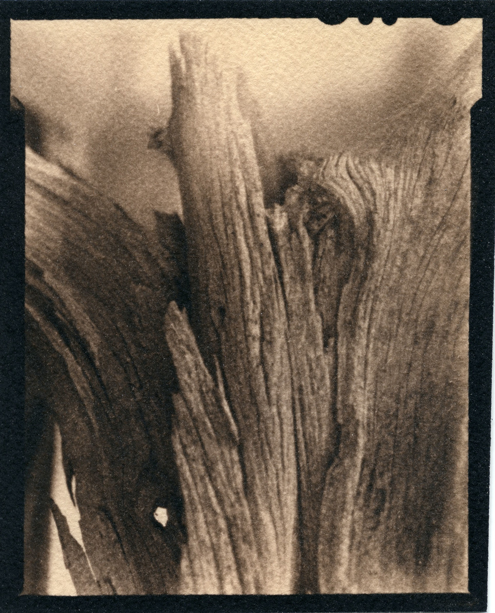 Smooth Bark     Toned Cyanotype, 2015