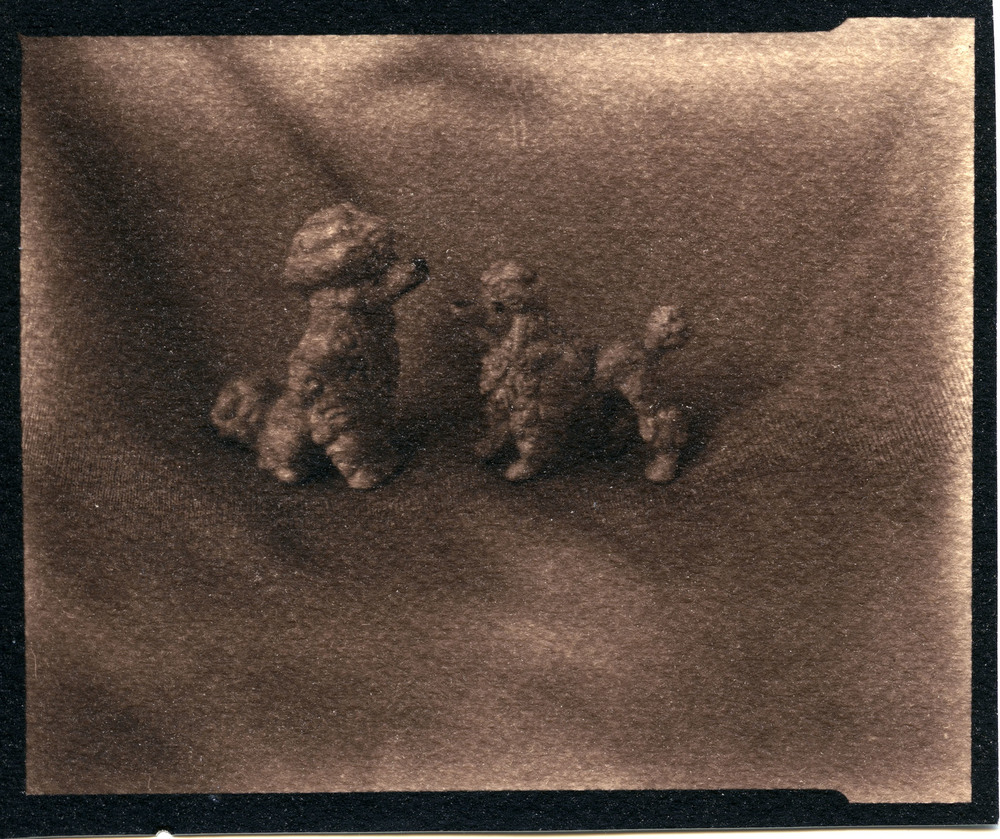 Silvia's Dogs    Toned Cyanotype, 2015
