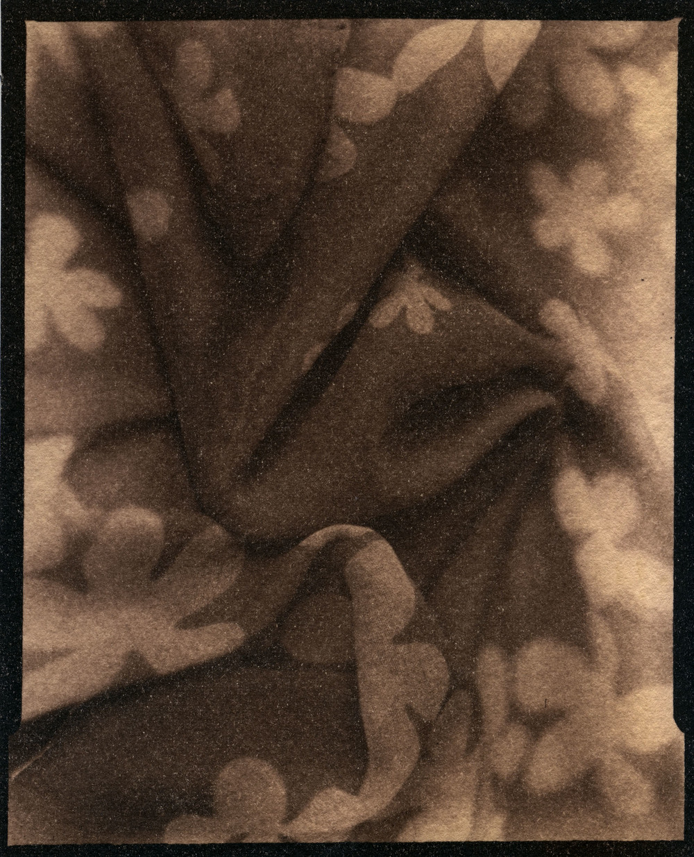 Anne's Scarf    Toned Cyanotype, 2015