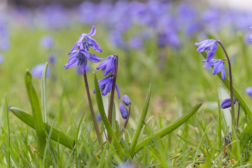 springblogpost-2.jpg