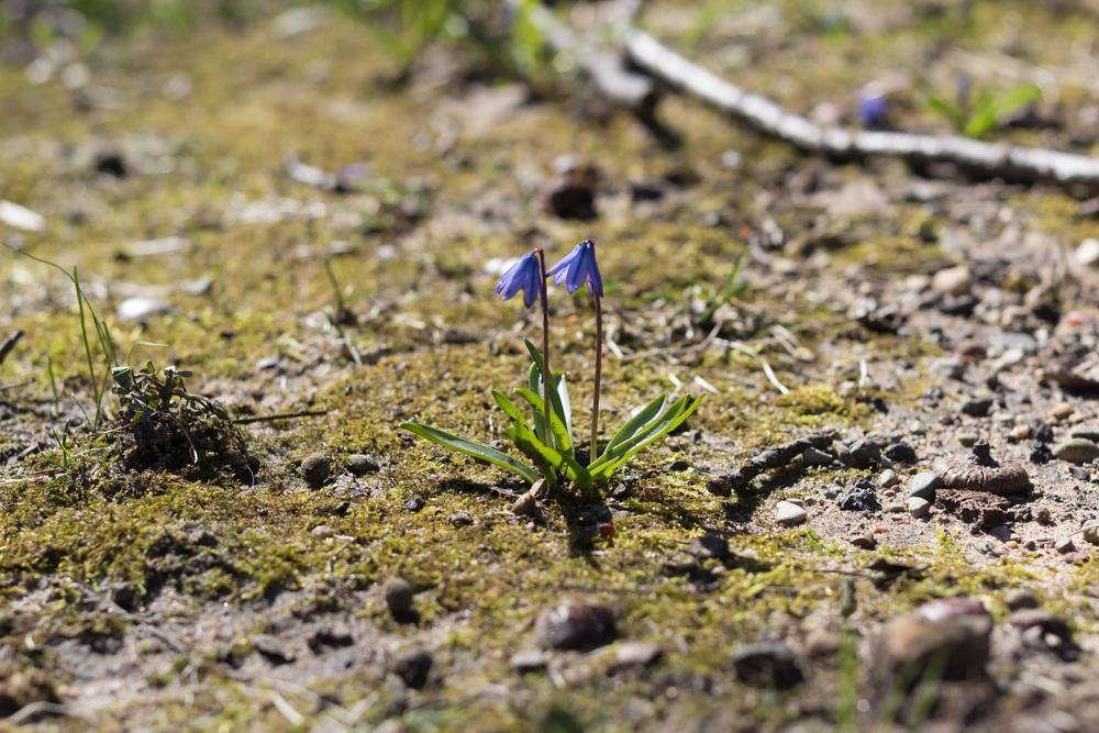 springblogpost-8.jpg
